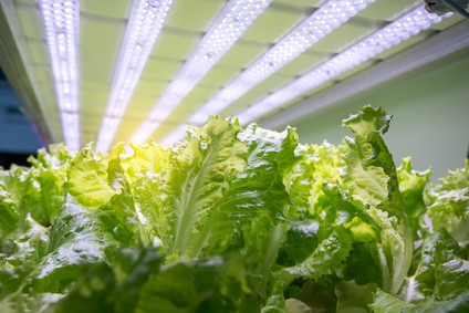 hydroponic led grow lights for vegetables