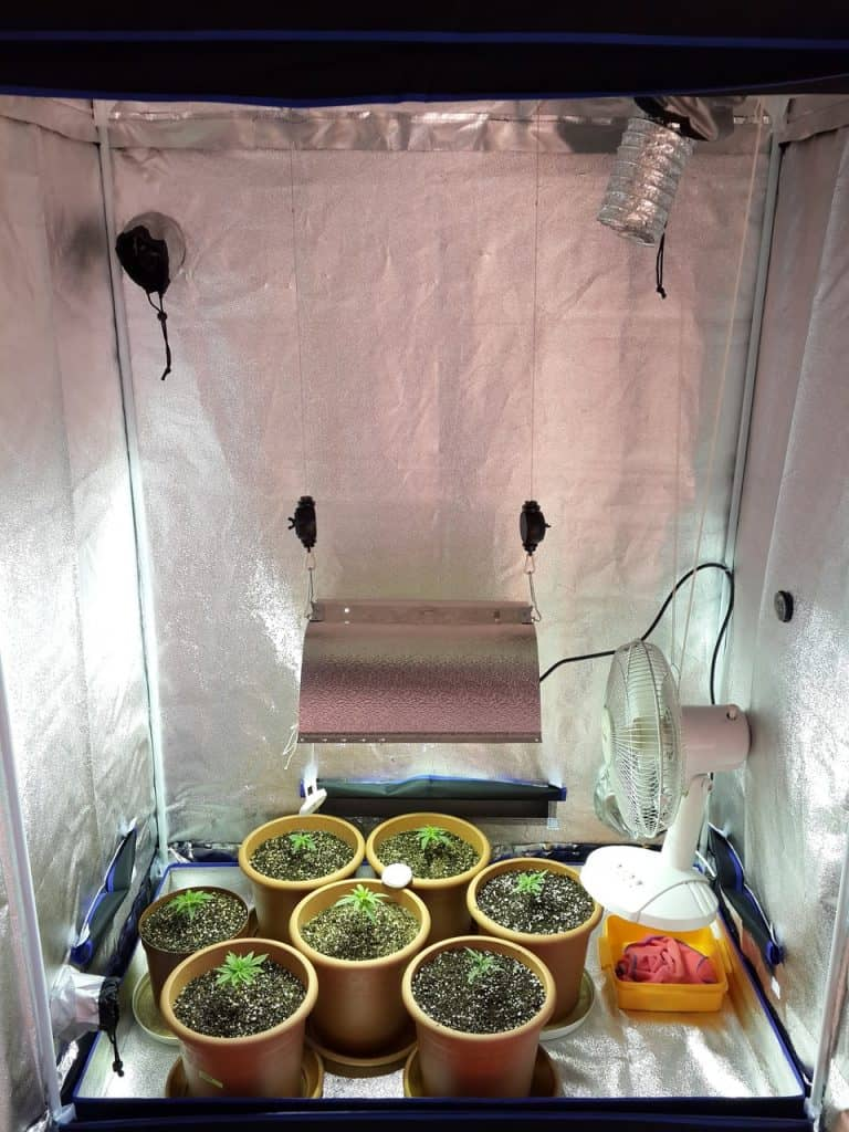how many plants in a grow tent