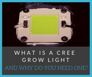 what is a cree grow light and why do you need one