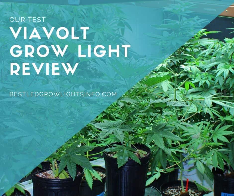 Viavolt grow light review