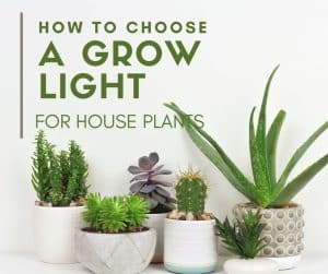 How to Choose a Grow Light for House Plants