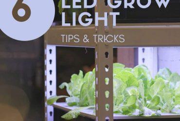 6 LED Grow Light Tips and Tricks